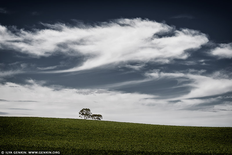 landscapes stock photography | On Hill Top, Clare Valley, South Australia (SA), Australia, Image ID AU-CLARE-VALLEY-0002