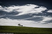 landscapes stock photography | On Hill Top, Clare Valley, South Australia (SA), Australia. A lone tree on top of the hill in Clare Valley in South Australia.