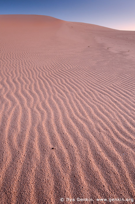 landscapes stock photography | Sand Dunes at Dark Point, Myall Lake National Park, NSW, Australia, Image ID DARK-POINT-DUNES-0001