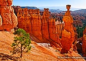 landscapes stock photography | Sunrise at Thor's Hammer, Sunset Point, Bryce Canyon National Park, Utah, USA, Image ID US-BRYCE-CANYON-0004. Morning time in the Bryce Canyon National Park, Utah, USA as the sun first rises and shines on Thor's Hammer, tall sandstone hoodoo along the Navajo Loop Trail, viewed from Sunset Point.