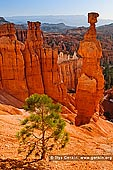 landscapes stock photography | Thor's Hammer at Sunrise, Sunset Point, Bryce Canyon National Park, Utah, USA, Image ID US-BRYCE-CANYON-0006. Stock photo of the Thor's Hammer in the Bryce Canyon National Park, Utah, USA. Morning time in the Bryce Canyon as the sun first rises and shines on Thor's Hammer, tall sandstone hoodoo along the Navajo Loop Trail, viewed from Sunset Point.