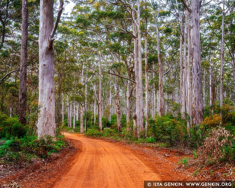 landscapes stock photography | Boranup Karri Forest, Leeuwin-Naturaliste National Park, WA, Australia, Image ID WA-KARRI-FOREST-0002