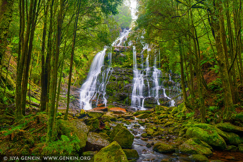 landscapes stock photography | Nelson Falls, Princess River Conservation Area, Tasmania (TAS), Australia