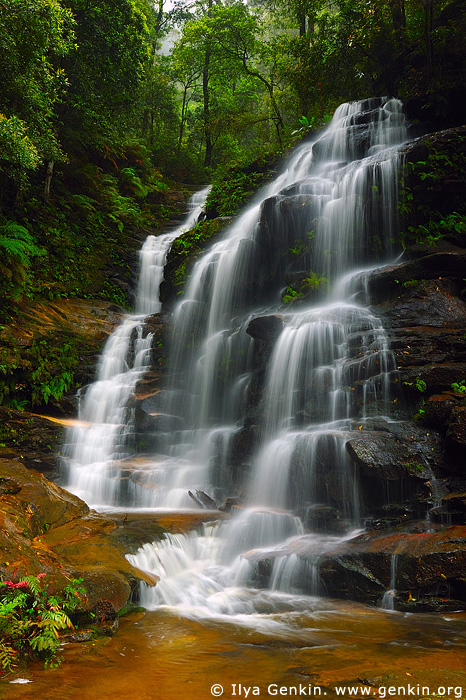 landscapes stock photography | Sylvia Falls, Valley of the Waters Creek, Blue Mountains National Park, New South Wales (NSW), Australia, Image ID AUWF0018