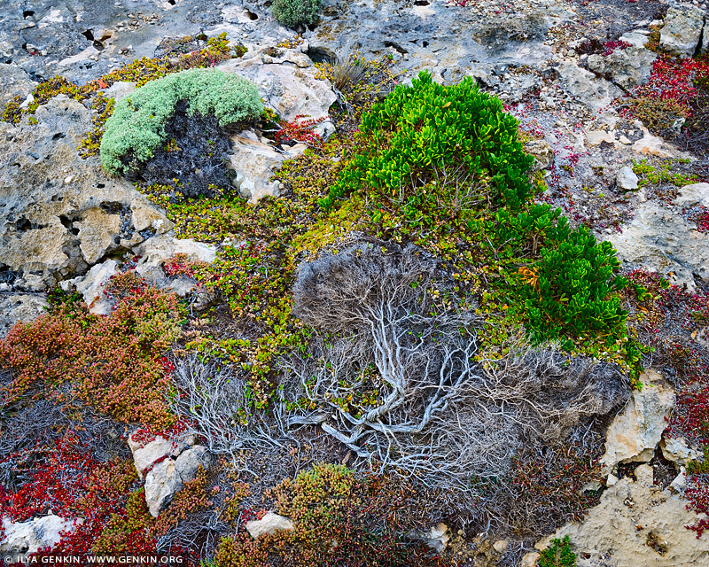 landscapes stock photography | 'Trees Grow on the Stones Too' #2, Flinders Chase National Park, Kangaroo Island, SA, Australia, Image ID INTIMATE-LANDSCAPE-0003