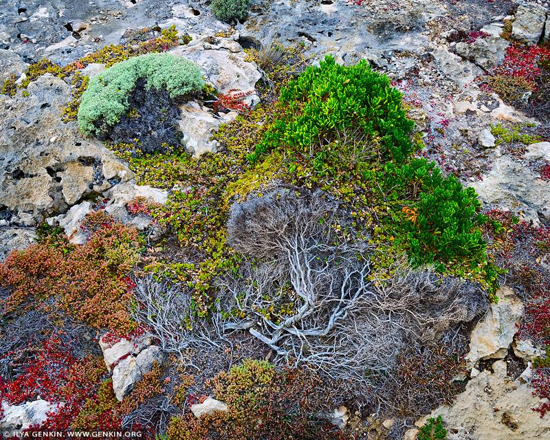 landscapes stock photography | 'Trees Grow on the Stones Too' #2, Flinders Chase National Park, Kangaroo Island, SA, Australia, Image ID INTIMATE-LANDSCAPE-0003