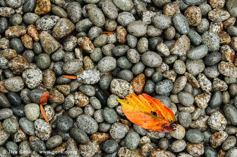 landscapes stock photography | Red-Yellow Autumn Leaf on Wet Pebbles, Kaikozan Hase-dera Temple, Kamakura, Honshu, Japan, Image ID INTIMATE-LANDSCAPE-0004