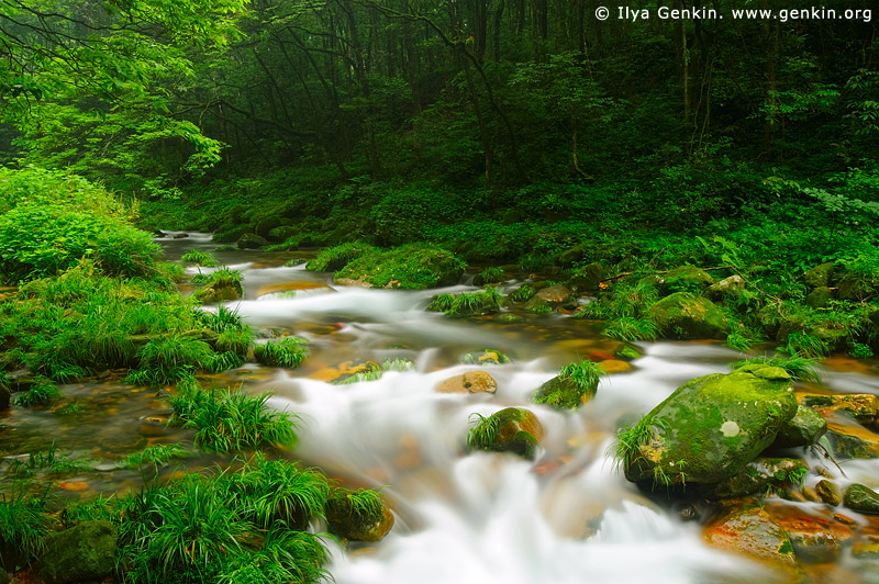 landscapes stock photography | Golden Whip Stream, Wulingyuan National Park, Zhangjiajie National Forest Park, China, Image ID CHINA-ZHANGJIAJIE-WULINGYUAN-0002