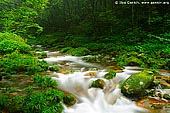 landscapes stock photography | Golden Whip Stream, Wulingyuan National Park, Zhangjiajie National Forest Park, China, Image ID CHINA-ZHANGJIAJIE-WULINGYUAN-0002.