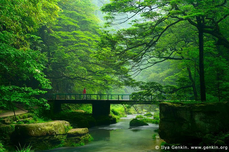 Bridge over the Golden Whip Stream, Wulingyuan National Park, Zhangjiajie National Forest Park, China
