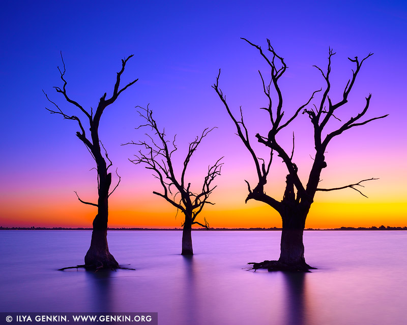 landscapes stock photography | Sunset at Lake Bonney, Barmera, Riverland, South Australia, Australia
