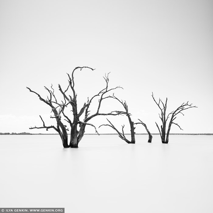 landscapes stock photography | Dead Trees at Lake Bonney, Barmera, Riverland, South Australia, Australia, Image ID AU-LAKE-BONNEY-RIVERLAND-0002