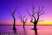 landscapes stock photography | Sunset at Lake Bonney, Barmera, Riverland, South Australia, Australia, Image ID AU-LAKE-BONNEY-RIVERLAND-0003. Dead trees in the waters of lake Bonney at colourful and vivid sunset. On the edge of Lake Bonney, Barmera in South Australia is a wonderful place to enjoy the Riverland. Barmera is one of the most popular aquatic playgrounds in South Australia. Situated in the heart of the Riverland, Barmera is a pretty town situated on the shores of Lake Bonney, a lake renowned for its sunsets. Barmera is approximately a two and a half hour drive from Adelaide and two hours from Mildura. The Barossa and Clare Valleys, Mid-North and the lower Murray are all comfortable day tours away, whilst the other Riverland towns of Berri, Renmark, Loxton and Waikerie are all within a half hours drive. The Riverland enjoys a Mediterranean climate with long hot summer days, warm autumn and spring and generally mild winters. The area receives approximately 250mm of rain a year and enjoys more sunlight hours than Queensland. Lake Bonney is a fresh water lake fed from the Murray River through the Chambers Creek wetlands. Because the lake is shallow and has a sandy bottom, it provides safe swimming and is ideal for sailing, windsurfing, canoeing, kayaking, skiing, jet skiing, boating and fishing. The lake also abounds with bird life.
