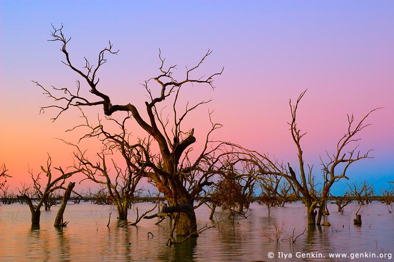 landscapes stock photography | Lake Pamamaroo at Dusk, Kinchega National Park, NSW, Australia, Image ID AU-LAKE-PAMAMAROO-0001