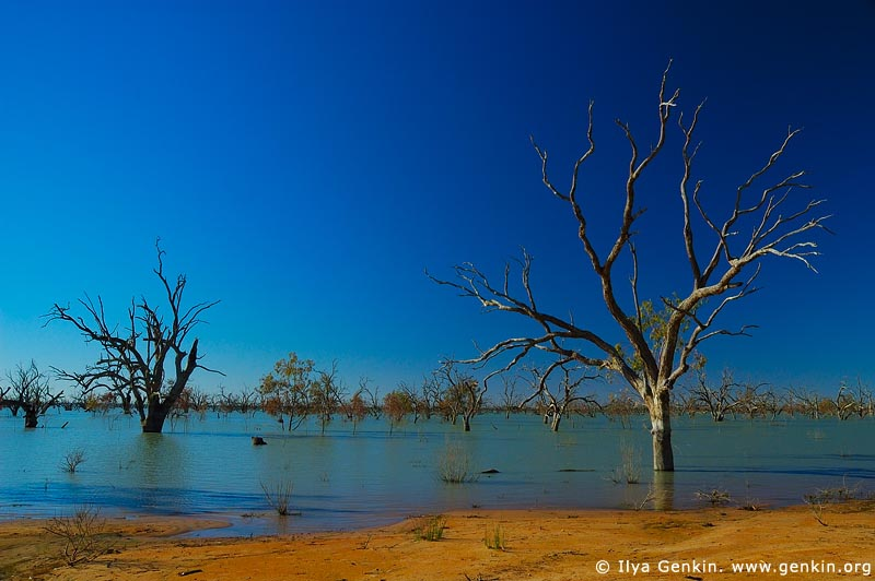 landscapes stock photography | Lake Pamamaroo, Kinchega National Park, NSW, Australia, Image ID AU-LAKE-PAMAMAROO-0004