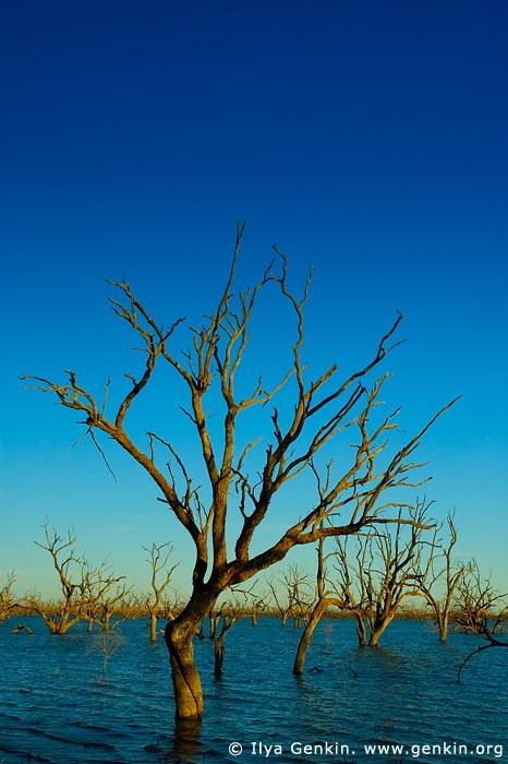 landscapes stock photography | Lake Pamamaroo, Kinchega National Park, NSW, Australia, Image ID AU-LAKE-PAMAMAROO-0005