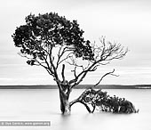 portfolio stock photography | Mangroves at Tenby Point, Western Port Bay, Victoria (VIC), Australia, Image ID AUSTRALIAN-COAST-BW-0003. Beautiful black and white photo of the mangroves with long exposure at high tide from the picturesque shores of Tenby Point on Western Port Bay, Victoria, Australia.