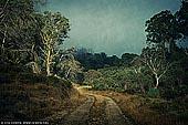 portfolio stock photography | Rural Road, Mount Buffalo, Victoria, Australia, Image ID INSTA-STYLE-0004.