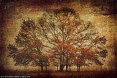 portfolio stock photography | Trees in Mist, Gostwyck, Uralla, NSW, Australia, Image ID INSTA-STYLE-0005.