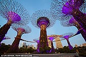 singapore stock photography | Supertree Grove in the Morning, Gardens by the Bay, Singapore, Image ID SINGAPORE-0007. While the Supertree Grove in Gardens by the Bay, Singapore is most beautiful at night with the light show, the Supertrees in the morning are quite beautiful as well. It's also much cooler and quieter in the morning.