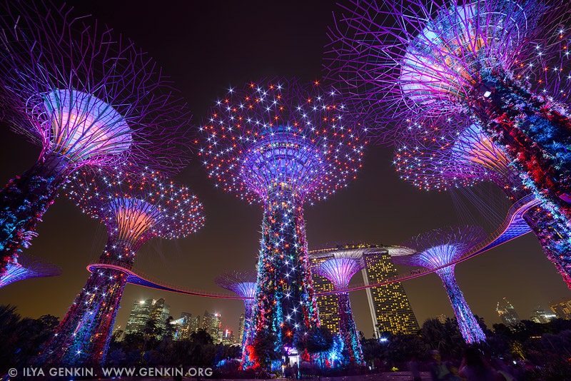singapore stock photography | Supertree Grove at Night, Gardens by the Bay, Singapore