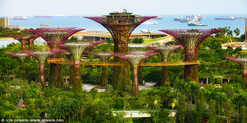 singapore stock photography | Supertree Grove, Gardens by the Bay, Singapore, Image ID SINGAPORE-0010